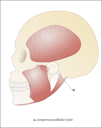 An illustrated diagram of the TMJ